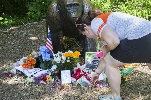 Harambe's 1 year commemoration at Cincinnati Zoo