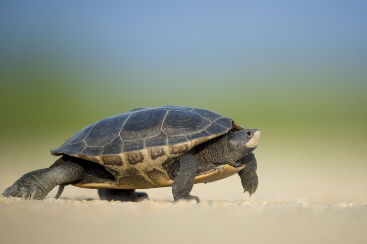 Scientises Control Turtle Using Use Parasitic Robots