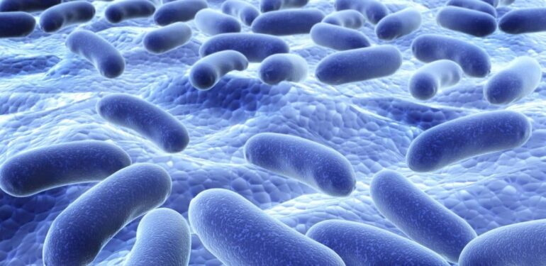 Probiotics For Chronic Kidney Disease