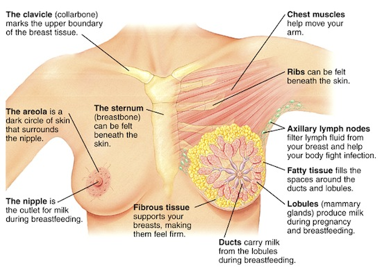 Early Warning Signs And Symptoms Of Breast Cancer Timeslifestyle