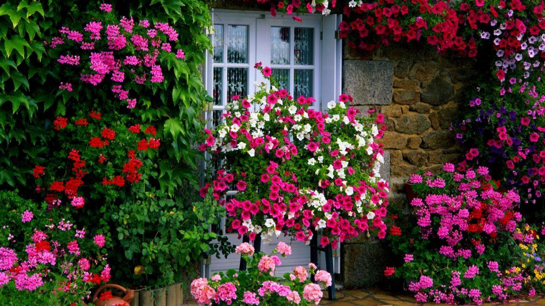 Choosing your hobby – consider flowers