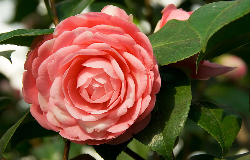 What Are the Most Expensive Flowers you can Buy?
