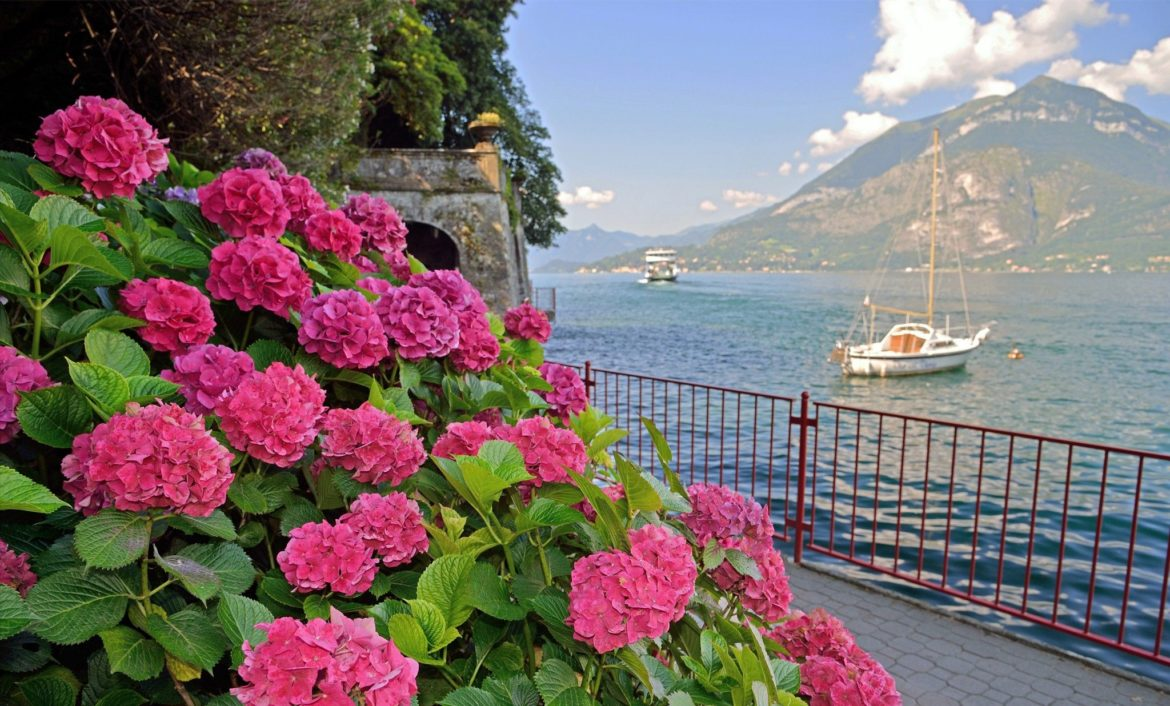 What are the most popular flowers in Italy