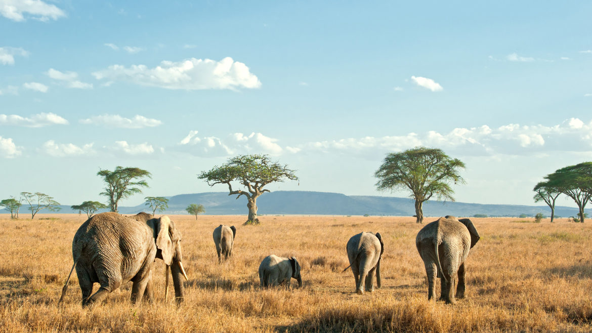 Why you should spend your vacation in Tanzania